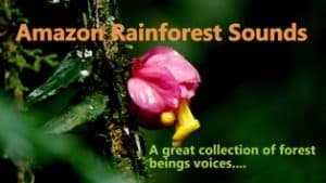 A great collection of hundreds of forest beings voices.