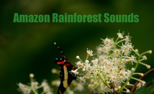 Great Collection of voices of hundresd of forest creatures.