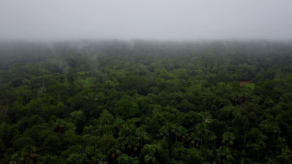 Shiripuno Amazon Lodge