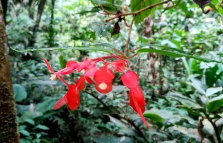 Wildflower of Common Plants of the Amazon Rainforest.