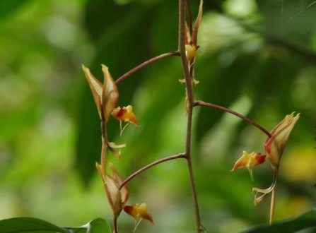 Wild Learning: Orchids of the Amazon Rainforest