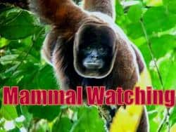 Mammal Watching Tour