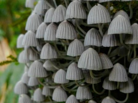 The Mushrooms and Fungi from the Amazon Rainforest in Ecuador