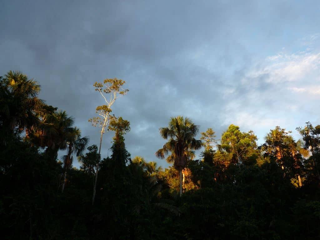 Yasuni Habitats