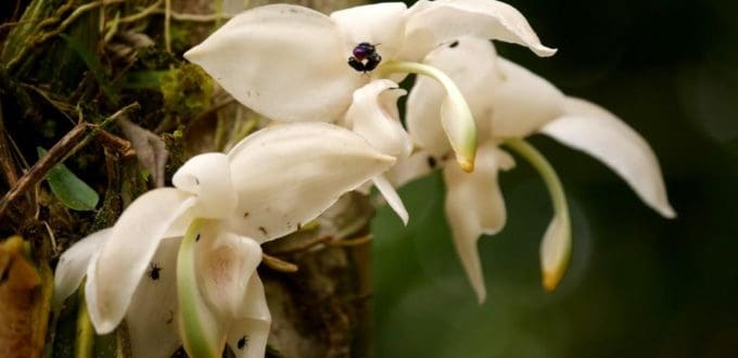 The Orchids of the Amazon Rainforest in Ecuador.