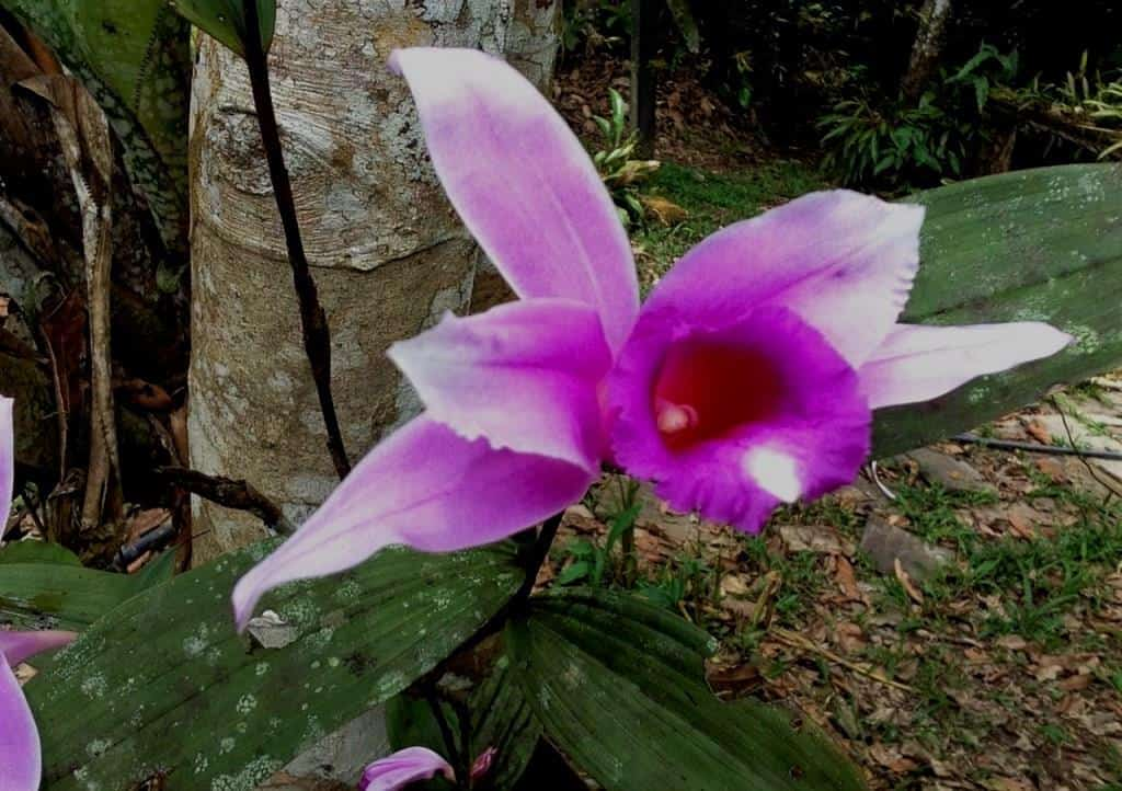 The Orchids of the Amazon Rainforest in Ecuador