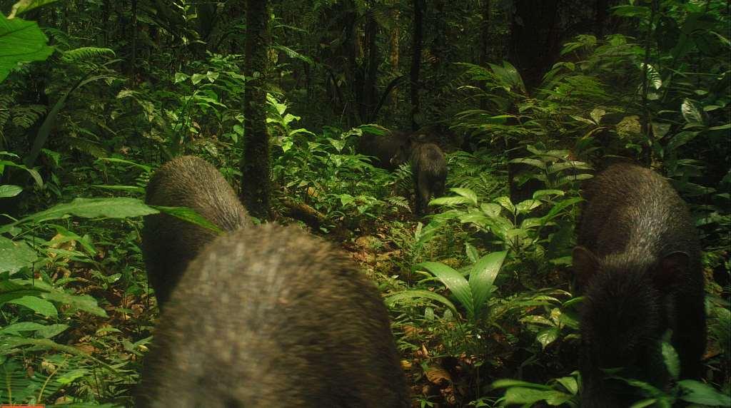 Amazon Rainforest Wildlife