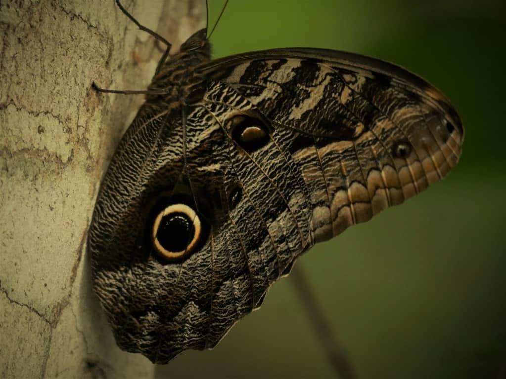 The Butterflies of the Amazon Rainforest in Ecuador