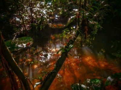 Amazon Rainforest or Amazon Basin