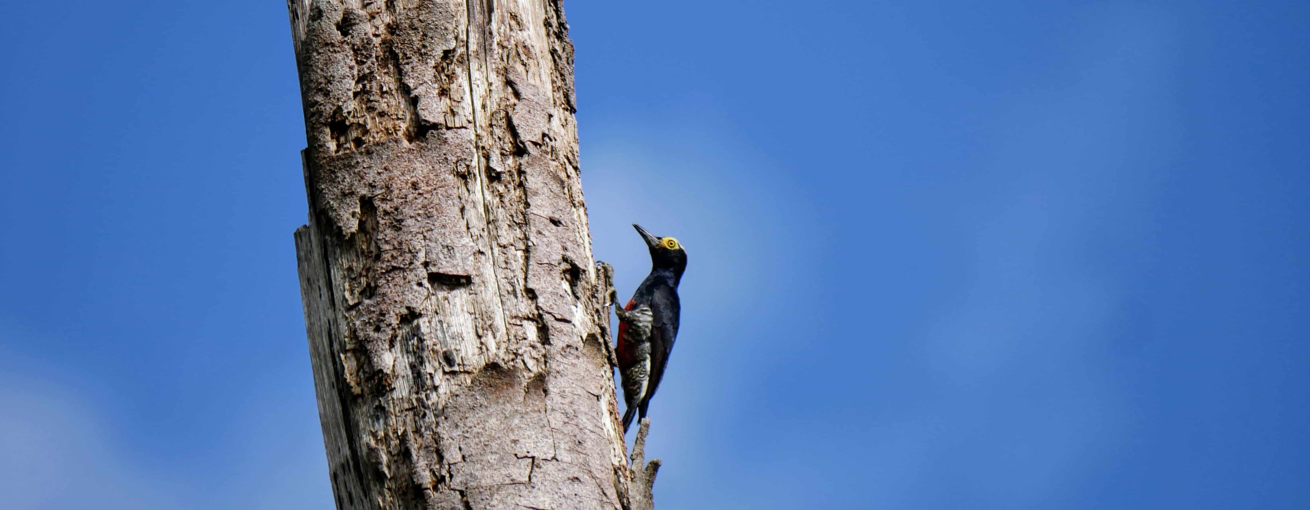 Common Trees of the Amazon Rainforest