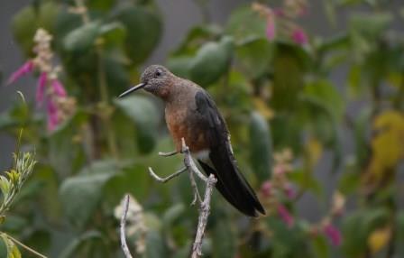 Ecuador Nature and Wildlife Tours