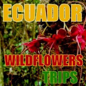 Ecuador Wildflowers Trips