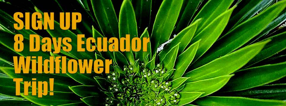 Sign Up 8 Days Ecuador Wildflower Excursion
