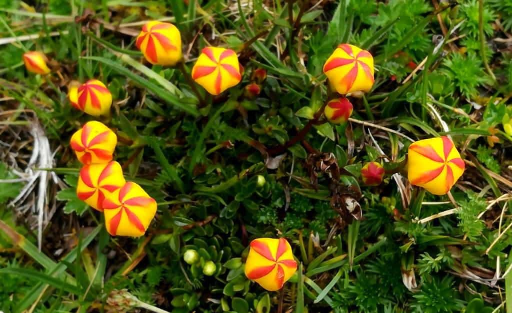 Ecuador Wildflowers Excursions in the Andes