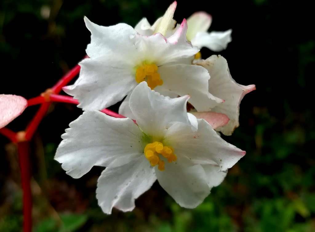 Ecuador Wildlife and Wildflowers Trips