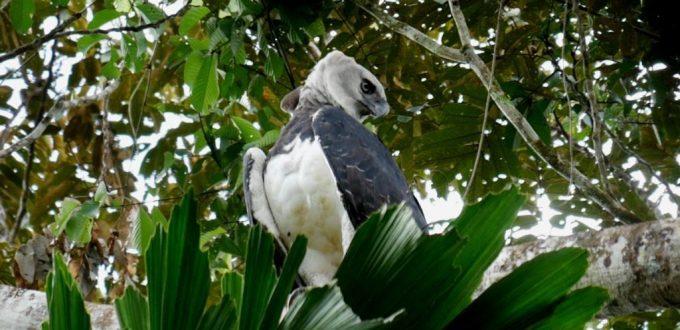 Amazon Birding in Ecuador - Departures